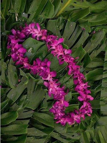 orchid floral lei for graduation
