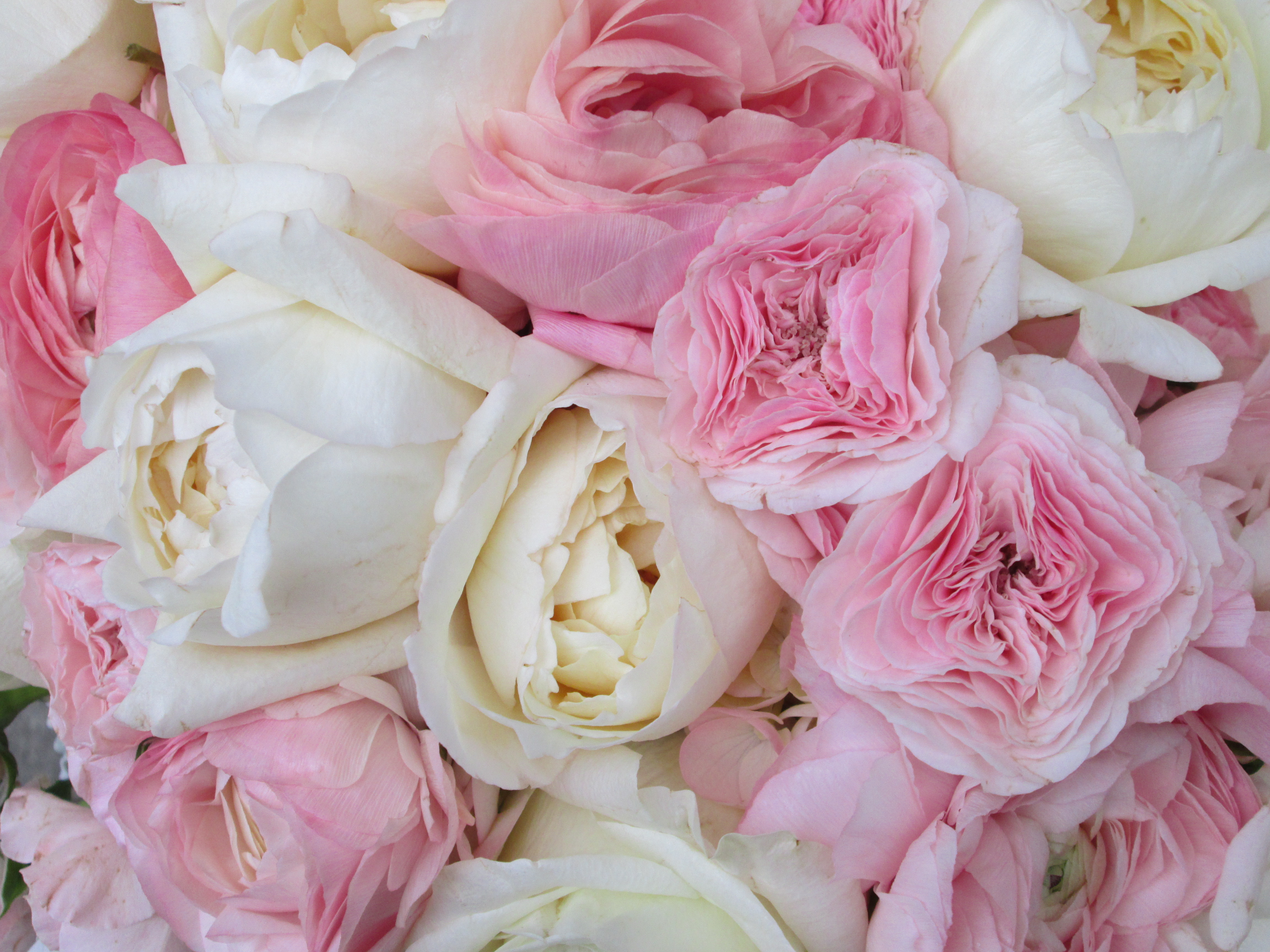 white and pink peony wedding