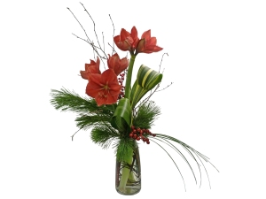 christmas amaryllis flowers