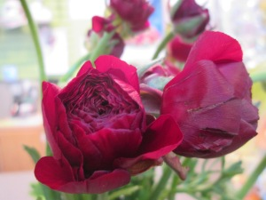 deep red ranunculus