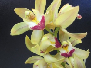 green cymbidium orchids