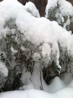 snow dec 10