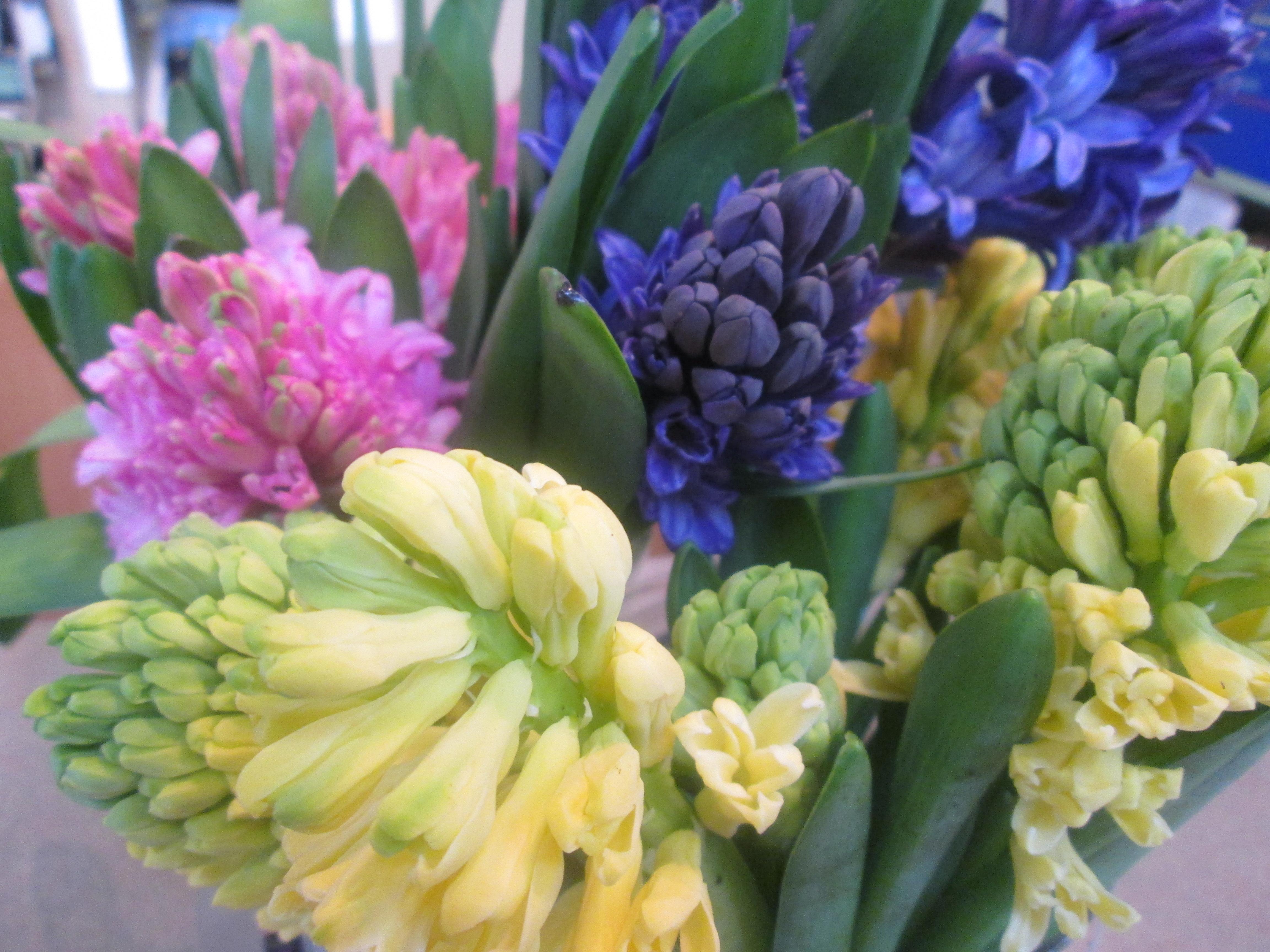 Flower Trends Styles Dandelions Flowers Gifts
